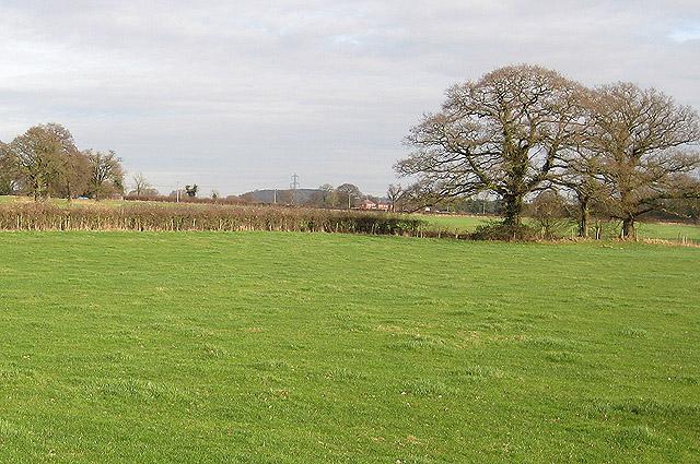 Grazing land near Taynton