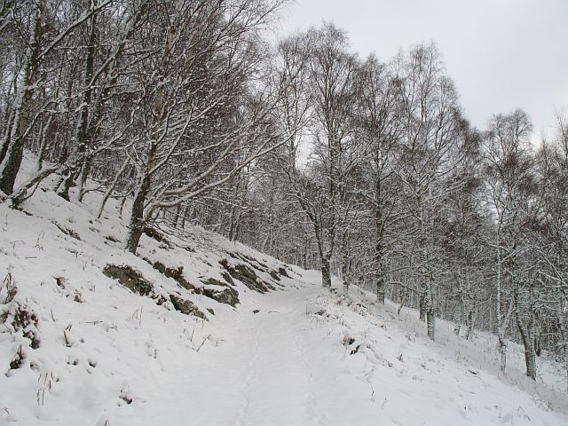 Woodland above Kinloch Rannoch