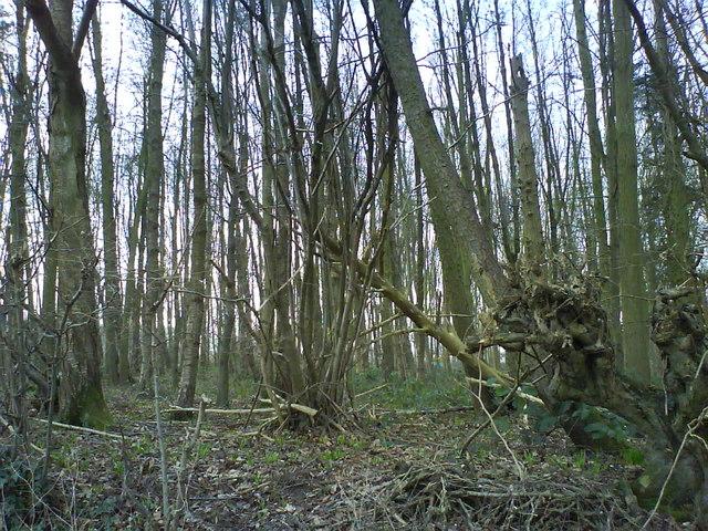 Wood Ayres End Lane