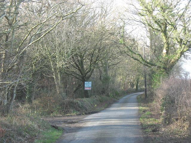 Woodlands for sale - Coed Mynydd-mawr