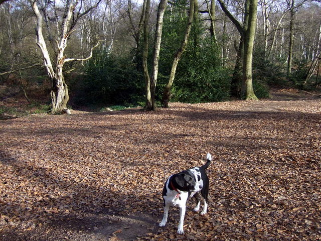 West Heath woods