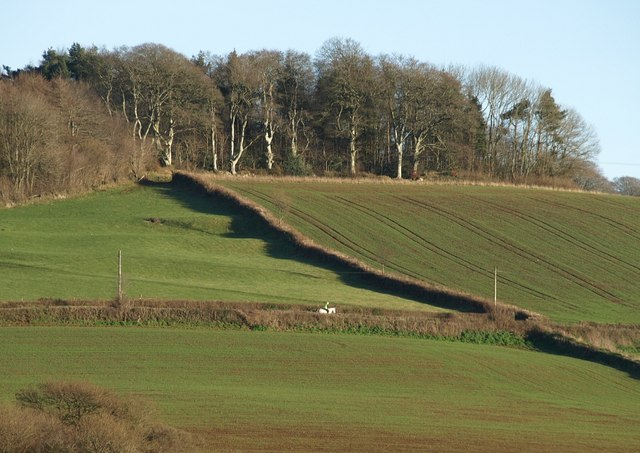 White horse near Ashwell