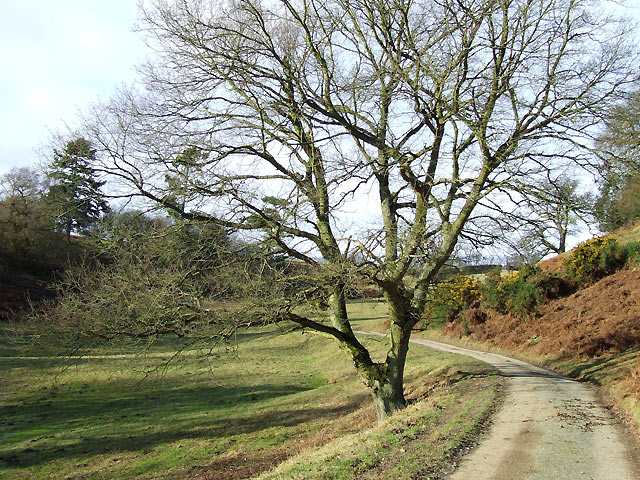 Track to Munslow Common, Shropshire