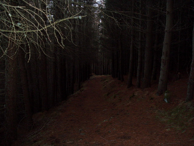 Woodland Path on Capel Mounth