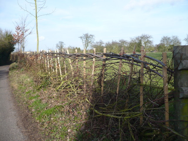 Hedge near the junction of Cellar Hill with Lynsted Lane