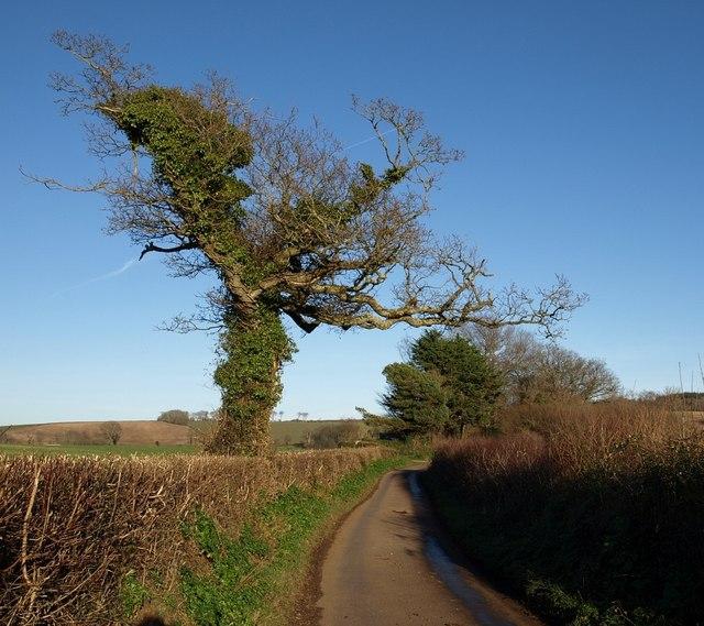 Tree on Humber Lane