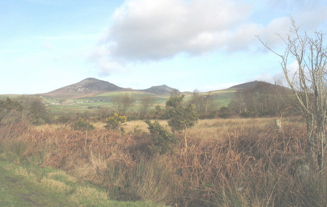 Bogland north of Bryn Farm