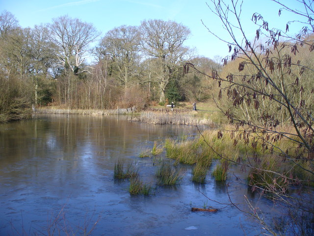 Pond on Great Bookham Common