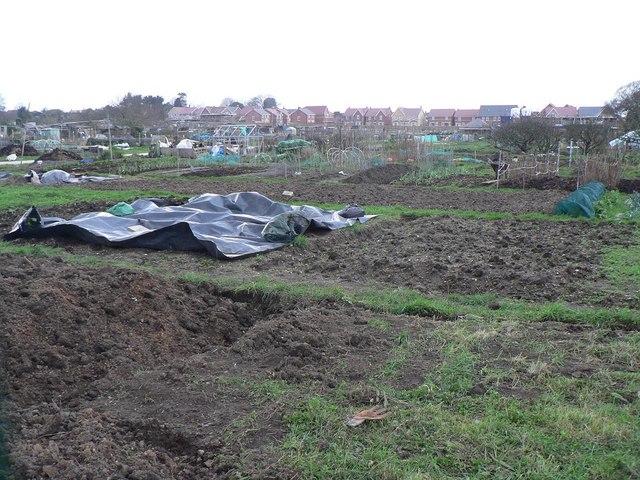 Ensbury Park: allotments