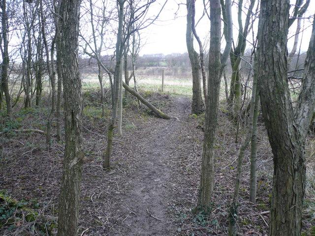 Avenue Washlands - Riverside Path leaves Woodland