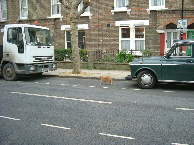 Cat crossing the road - Olliphant Street, W10