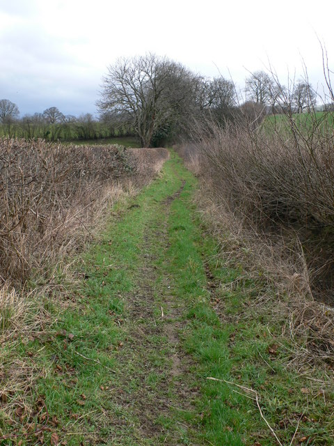 Bridleway between Plas Einion and the A525