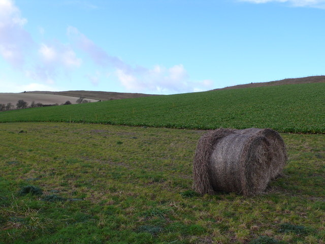 Winter fodder field at Maiden Castle