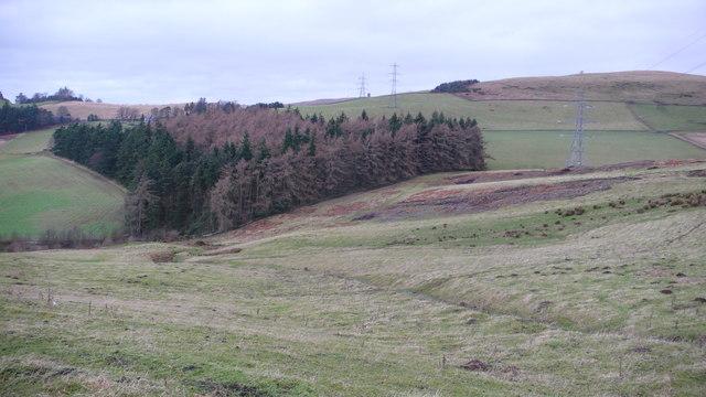 Plantation and Pylons