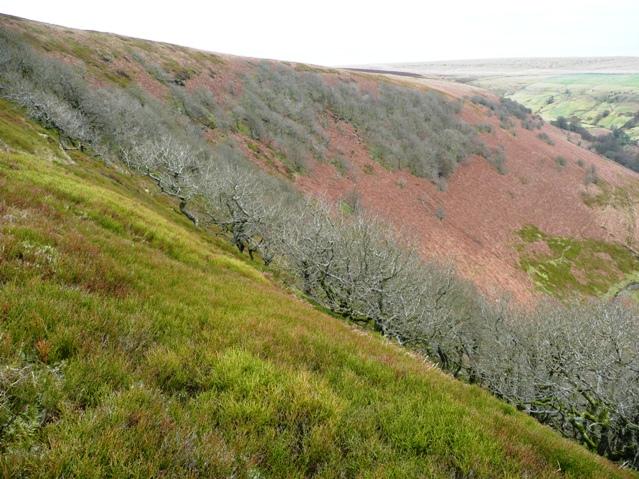 Eastern slope of Mynydd James