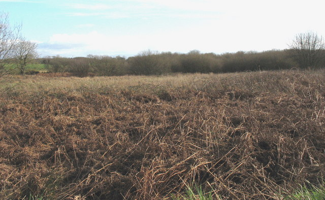 Infertile wetland south of Bryn Farm
