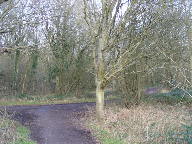 Bridleway Junction, Great Bookham Common