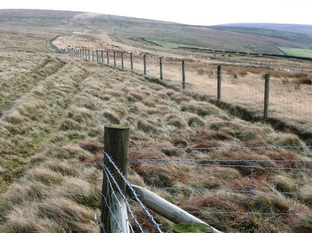 Bridleway towards Mynydd Coety