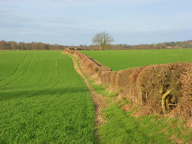 Farmland near Marlow