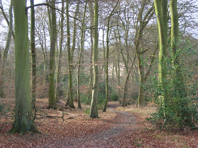 Pimlock's Wood, Bradenham
