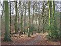 SU8396 : Pimlock's Wood, Bradenham by Andrew Smith