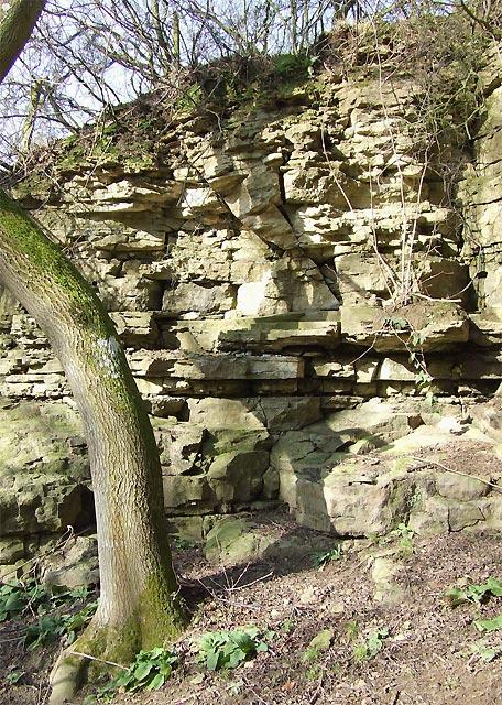 Limestone Exposure near Munslow, Shropshire