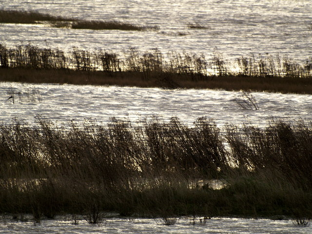 Reed Beds in Paull's Tidal Lagoon