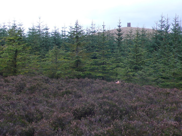 Forestry and heather