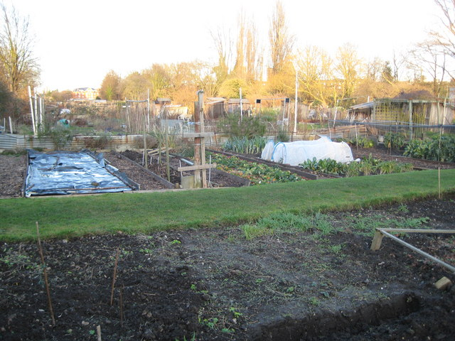 East Sheen: Hertford Avenue allotments