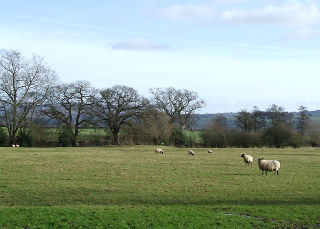 Grazing at Corfton, Shropshire