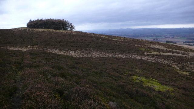 Remote hillside plantation