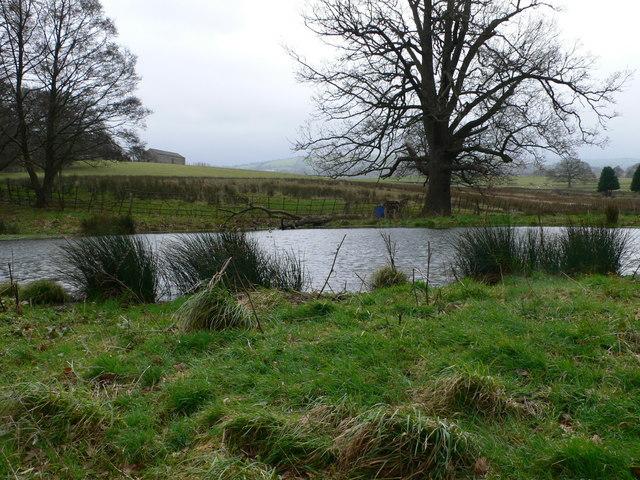 Pond, Llwyn Ynn Estate