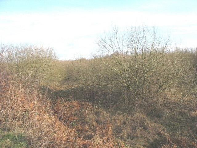 A wasteland of brushwood and bracken