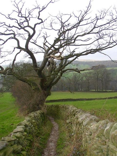 Bridleway to Bolton Abbey