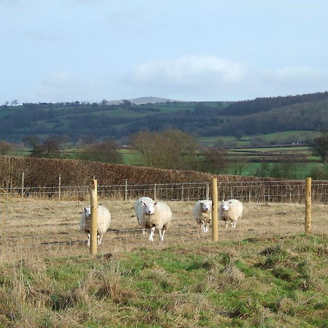Farmland south of Culmington, Shropshire