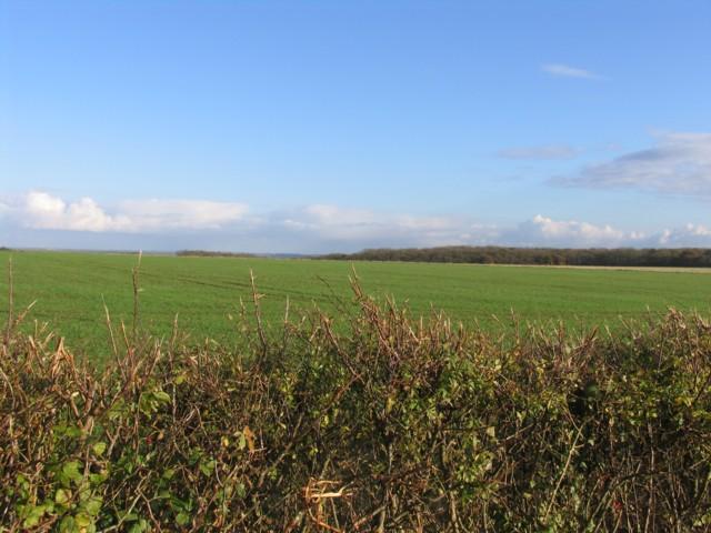 Towards Aversley Wood