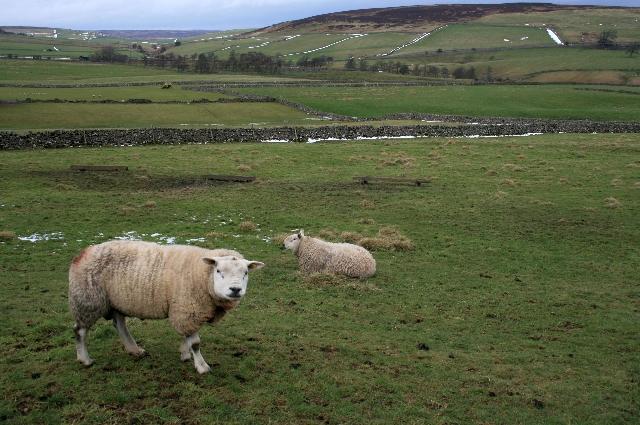 Pasture, Nun Cote Nook