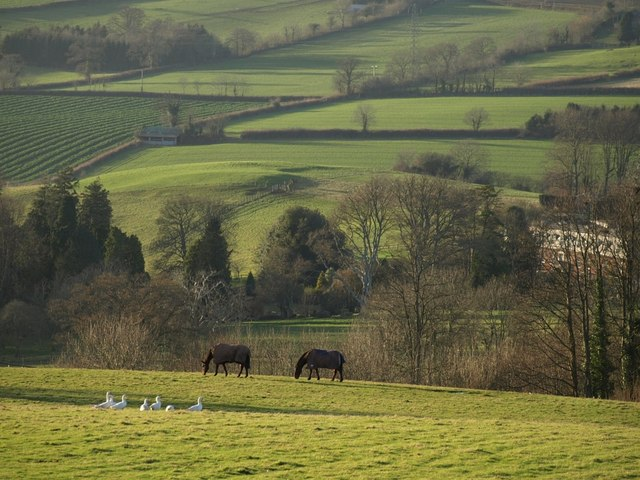 Geese and horses near Lindridge