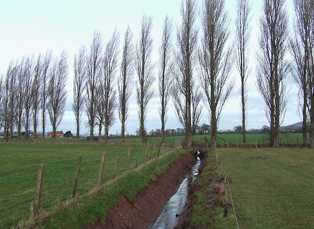 Drainage Ditch, Lawton, Shropshire