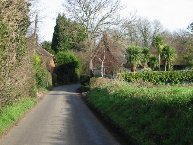 A tropical looking Hay Lane, near Ham