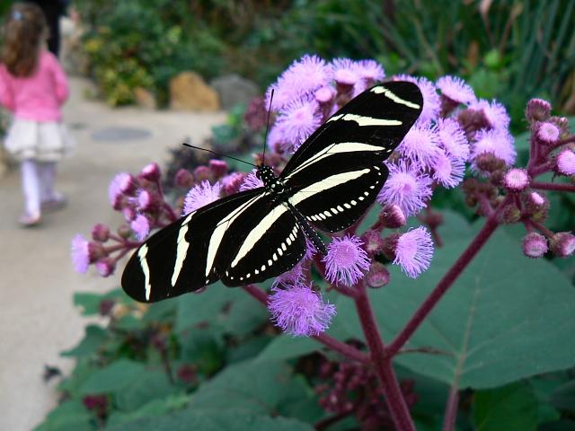 Butterfly World, Blooms Garden Centre, North Wiltshire