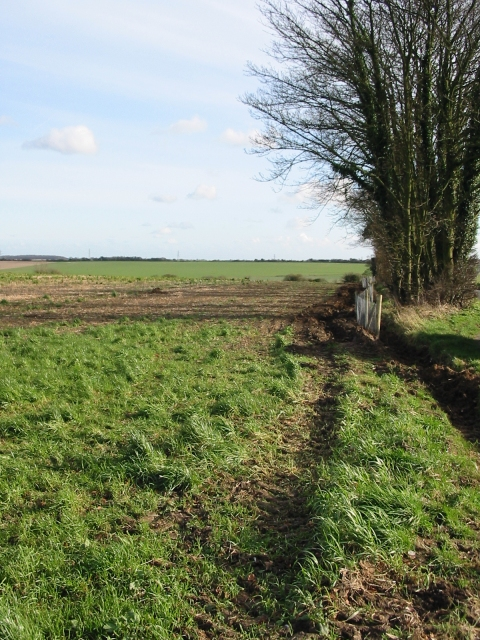 Field boundary adjacent to the road to Elvington