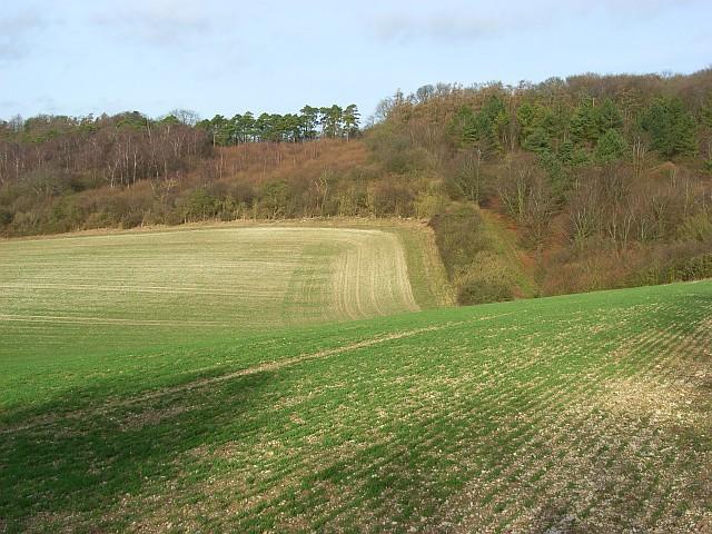Farmland and plantation, Ewelme Park