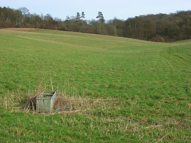 Pasture, Swyncombe