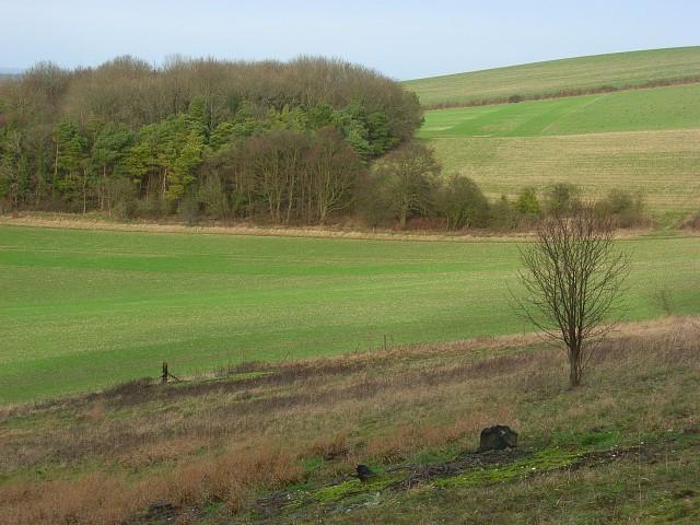 Farmland and copse, Swyncombe