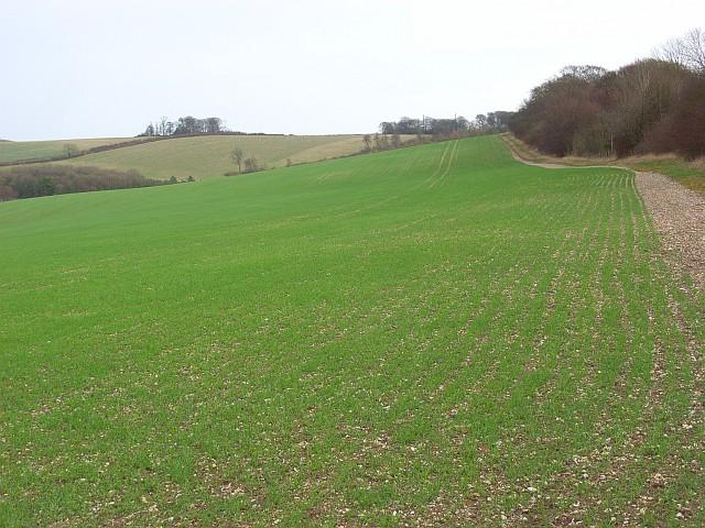 Farmland, Swyncombe Downs