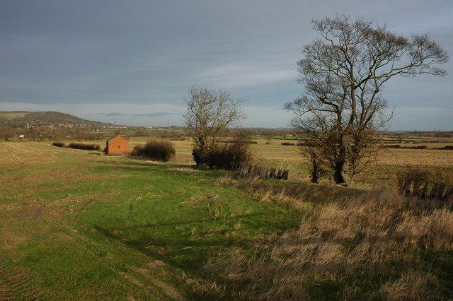 Hedgerow in Dumbleton