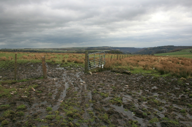 Gate, Musgrove or Cleaburn Pasture