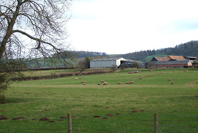Grazing near North Sutton, Shropshire