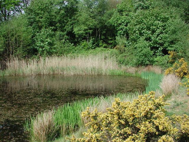 Hidden Pond by A41
